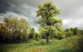 Картинка поле, лето, дерево