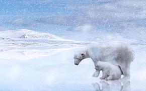 Картинка зима, снег, отражение, рендеринг, холмы, берег, малыш, медведь, пара, медвежонок, белые, светлый фон, метель, снегопад, …
