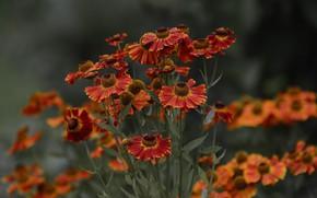 Картинка цветы, боке, летнее настроение, природа .