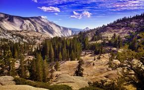 Картинка лес, облака, горы, синева, скалы, склоны, вид, ели, рельеф