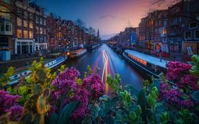 Картинка цветы, транспорт, здания, канал, Amsterdam - My Home