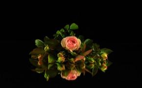 Картинка отражение, фон, черный, розы, букет, бутоны