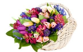 Обои цветы, тюльпаны, корзинка, гиацинты