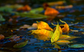 Картинка в воде, осенние листья, размытость боке