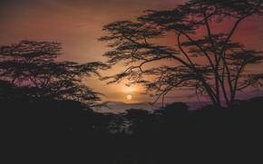 Картинка деревья, ночь, природа