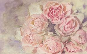 Картинка капли, розы, обработка, букет, лежат