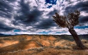 Картинка небо, дерево, долина
