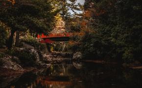 Картинка фото, Природа, Мост, Деревья, Япония, Водный канал, Bridge on Miyajima Island