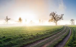 Картинка дорога, поле, туман, утро