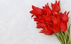 Картинка цветы, букет, тюльпаны, красные, red, fresh, flowers, tulips, spring