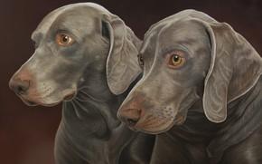 Картинка собаки, фон, пара