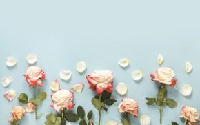 Картинка цветы, фон, розы, бутоны, pink, flowers, roses