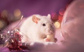 Картинка взгляд, свет, украшения, фон, розовый, праздник, глазки, лапки, размытие, мышь, мышка, мордочка, Новый год, белая, …