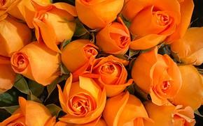 Картинка розы, букет, оранжевые, много