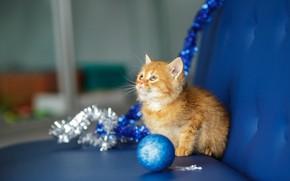 Картинка кошка, взгляд, синий, котенок, фон, диван, новый год, шарик, малыш, рыжий, мордочка, милый, котёнок, мишура, …