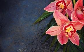 Картинка листья, цветы, орхидея, цимбидиум