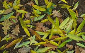 Картинка осень, листья, земля