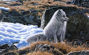 Картинка зима, трава, взгляд, свет, снег, природа, поза, камни, рисунок, картина, весна, арт, живопись, сидит, сухая, …