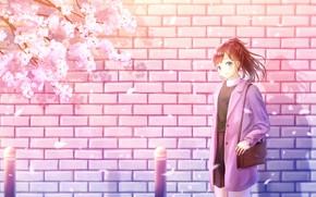 Картинка девушка, стена, весна, сакура, кирпичная стена