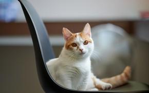 Картинка кошка, взгляд, котейка