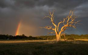 Картинка поле, лето, дерево, радуга