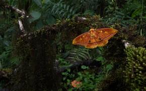 Картинка трава, листья, макро, темный фон, бабочка, мох, оранжевая, насекомое