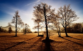 Картинка поле, свет, деревья, природа