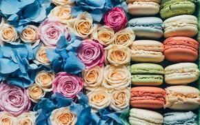 Картинка розы, печенье, бутоны, макаруны, корбка