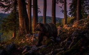 Картинка лес, закат, природа, камни, вечер, медведь