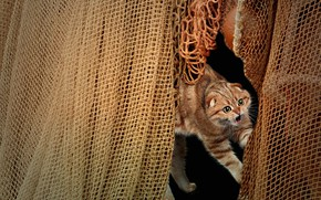 Картинка кошка, кот, взгляд, поза, рендеринг, сеть, пасть, фотоарт