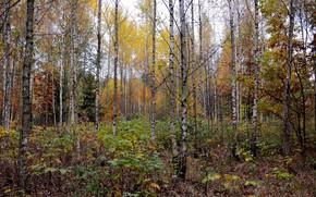 Картинка осень, лес, природа, настроение
