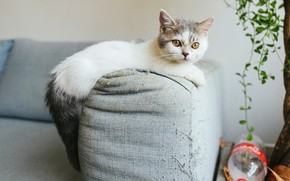 Картинка кошка, взгляд, котенок, комната, диван, ткань, нитки, когтеточка, проказник, затяжки, баловник