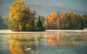 Картинка осень, озеро, лебедь