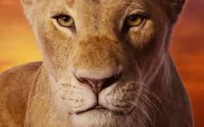Картинка взгляд, морда, львица, Король Лев, The Lion King