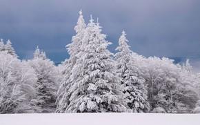 Картинка зима, иней, лес, небо, облака, снег, деревья, природа, ветви, ели, сугробы, белые, ёлочки, заснеженные, смешанный