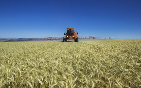 Картинка wheat, agriculture, jacto