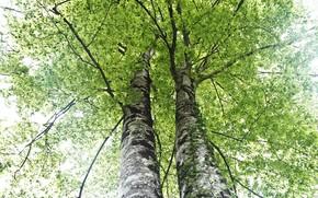 Картинка деревья, весна, природа
