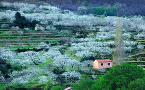 Картинка вишня, весна, Испания, цветение, Валье-дель-Херте, провинция Касерес