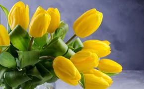 Картинка цветы, фон, букет, желтые, тюльпаны, красивые