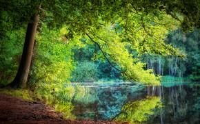 Картинка лето, вода, река, дерево, крона
