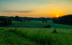 Картинка зелень, поле, лето, небо, трава, солнце, свет, закат, даль, вечер, луг, простор, лесополоса