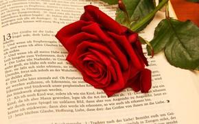 Обои цветок, роза, Книга