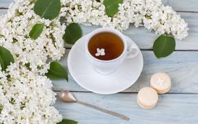 Картинка чай, ветка, утро, печенье, белая, сирень