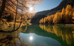 Картинка осень, лес, пейзаж, природа, озеро, прозрачная вода, красота