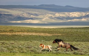 Картинка поле, горы, лошадь, кони, лошади, бег, пара, жеребенок