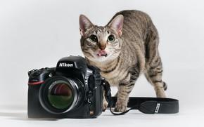 Картинка язык, кошка, кот, фотоаппарат