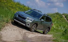 Картинка трава, Subaru, грязь, кроссовер, Forester, 2019