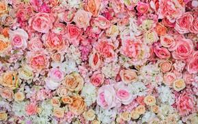 Картинка цветы, фон, розы, розовые, бутоны, pink, flowers, roses, bud