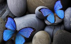 Картинка blue, stones, insect