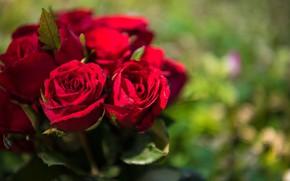 Картинка цветы, букет, Розы, бутоны